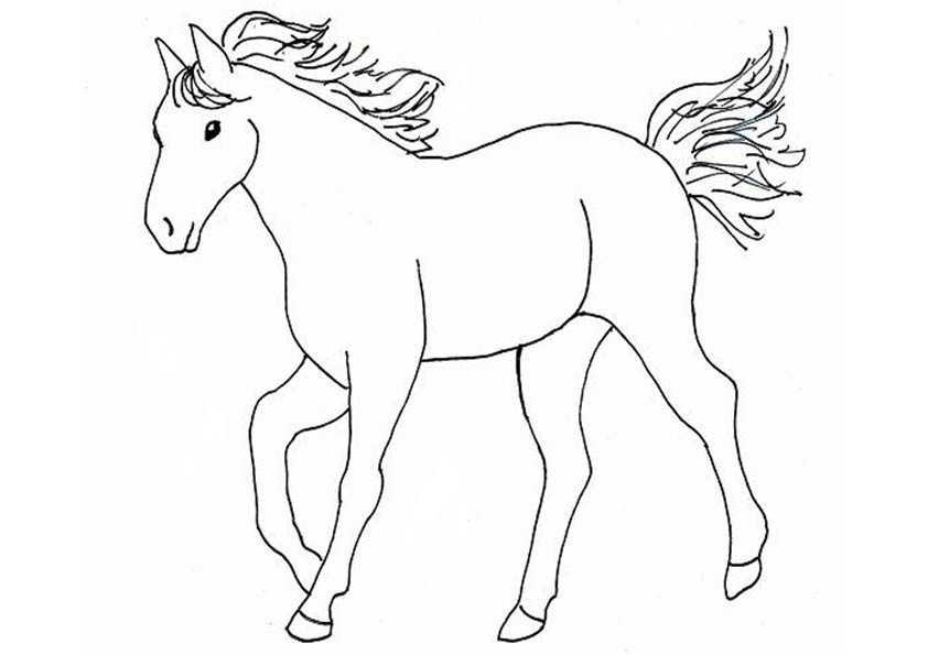 pferde malvorlagen 07