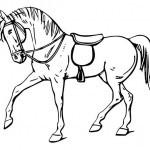pferd-41
