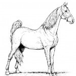 Pferde 32