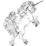 pferde-47