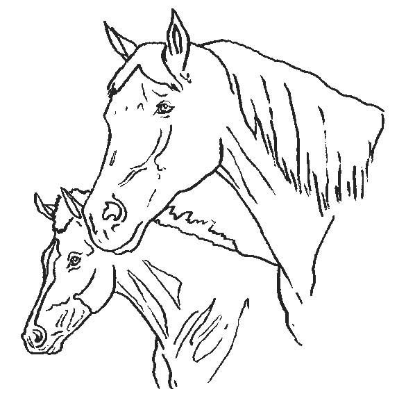 pferde44