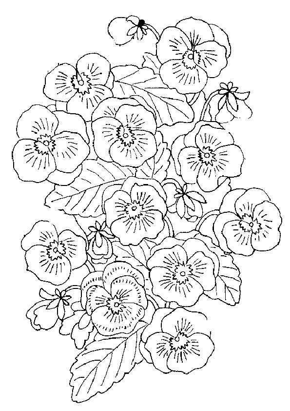 Ziemlich Schöne Blumen Malvorlagen Bilder - Framing Malvorlagen ...