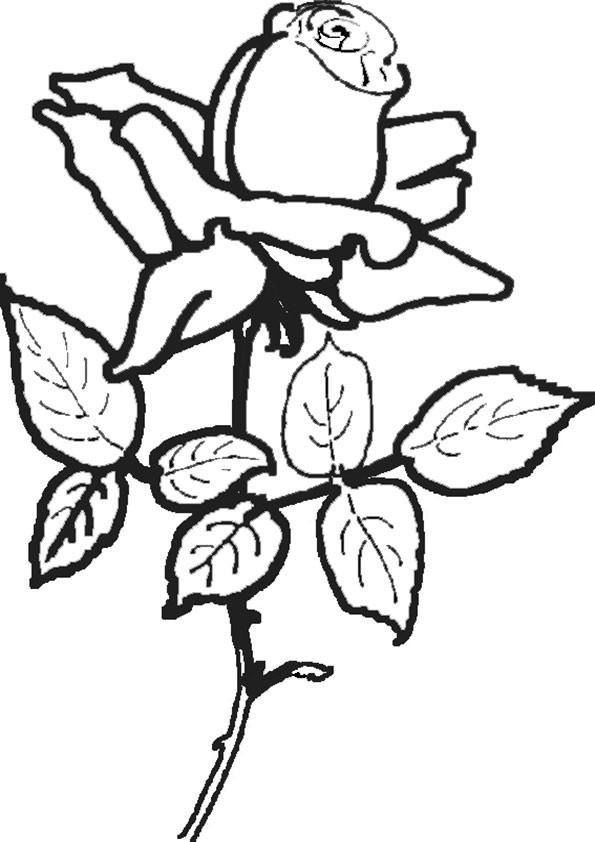Ausmalbilder Blumen 19