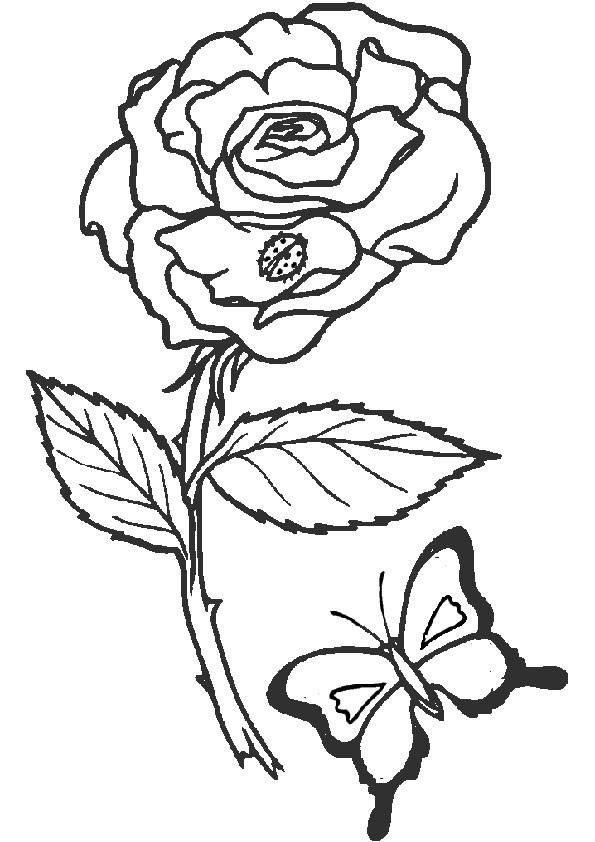 Ausmalbilder Blumen 2