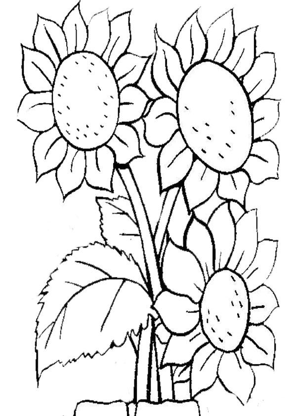 Ausmalbilder Blumen  3