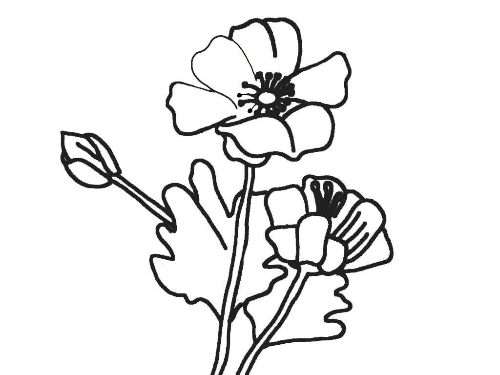 Ausmalbilder Blumen 7