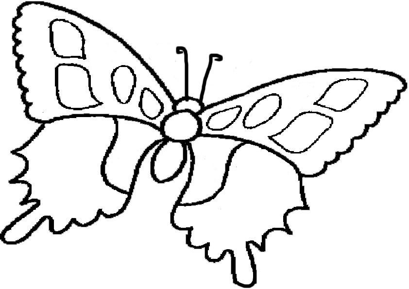 Ausmalbilder Schmetterling 12