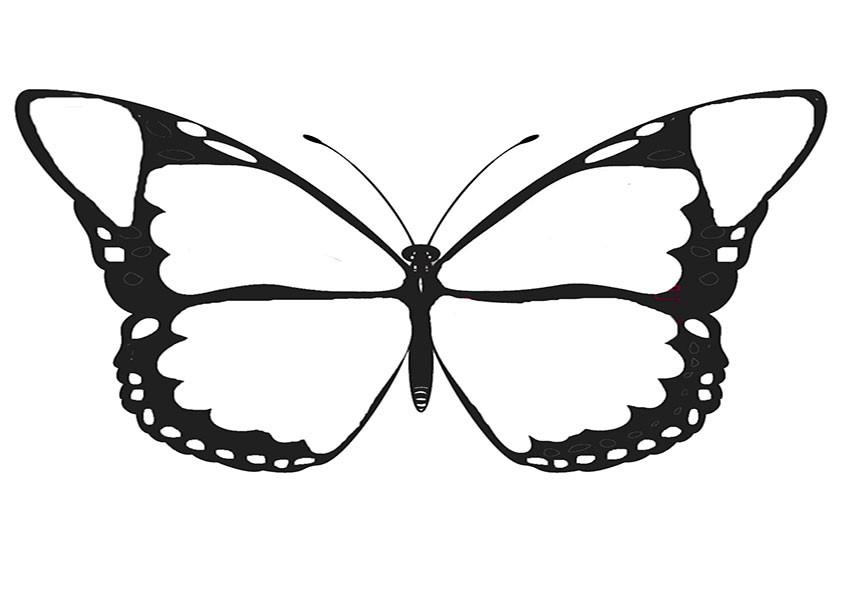 Ausmalbilder Schmetterling 8