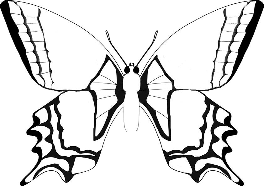Ausmalbilder Schmetterling 9 Ausmalbilder Malvorlagen