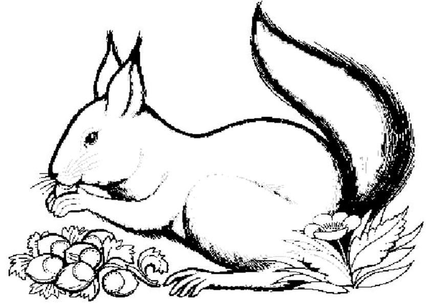 ausmalbilder tiere 14 | ausmalbilder malvorlagen
