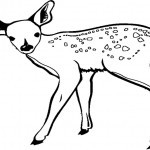 Tiere-15
