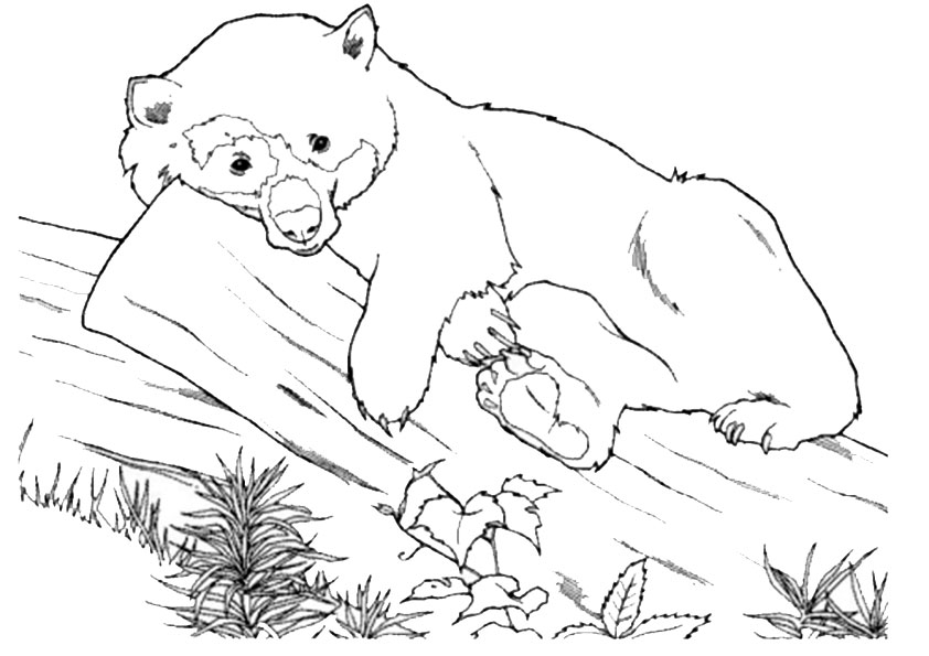 Ausmalbilder Bär