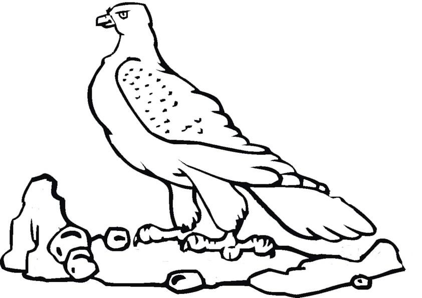 Ausmalbilder Falke 4