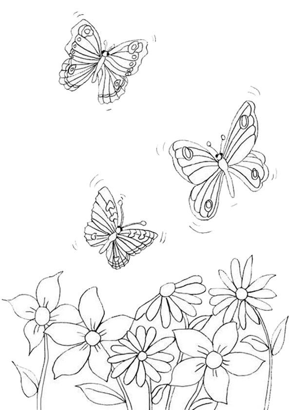 Ausmalbilder Schmetterling-17