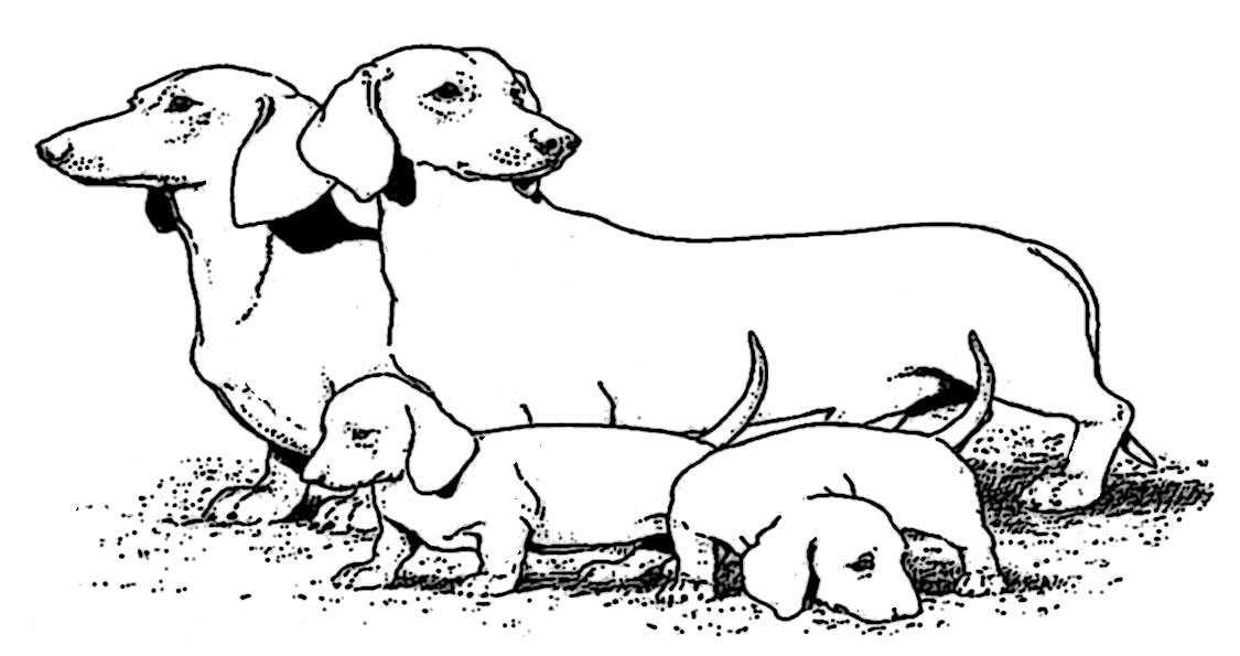 ausmalbilder hunde-8