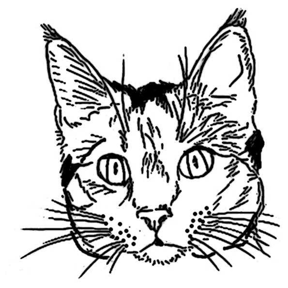 Katze Ausmalbilder 52 Ausmalbilder Malvorlagen