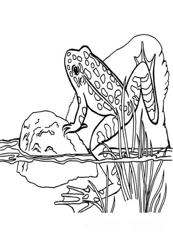ausmalbilder frosch-1