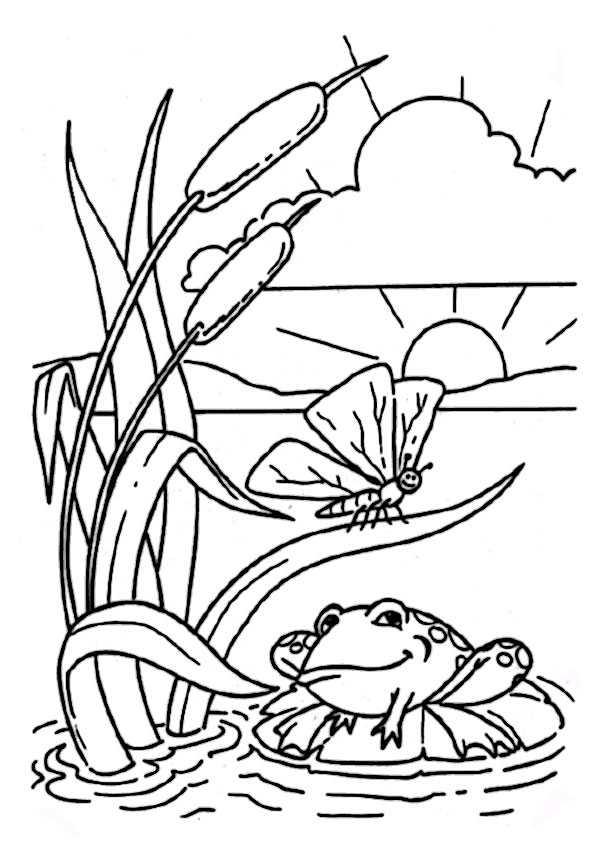 ausmalbilder frosch-2