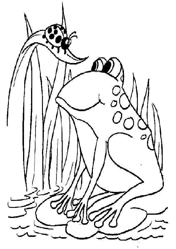 frosch ausmalbilder-14