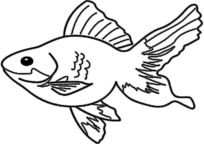 ausmalbilder fische-4
