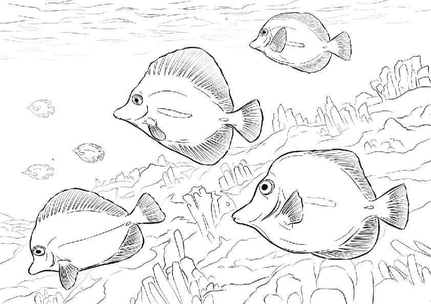 ausmalbilder fische-6