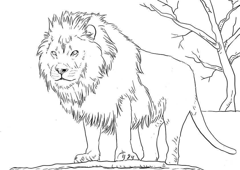 ausmalbilder löwe-5