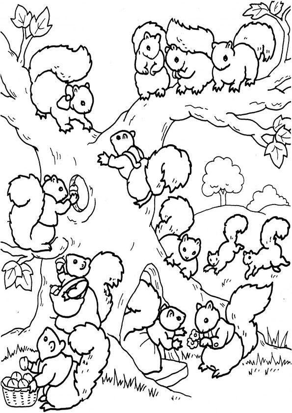 eichhörnchen-4 | ausmalbilder malvorlagen