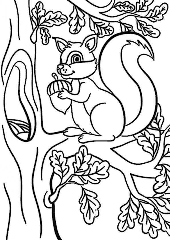 ausmalbilder eichhörnchen-10