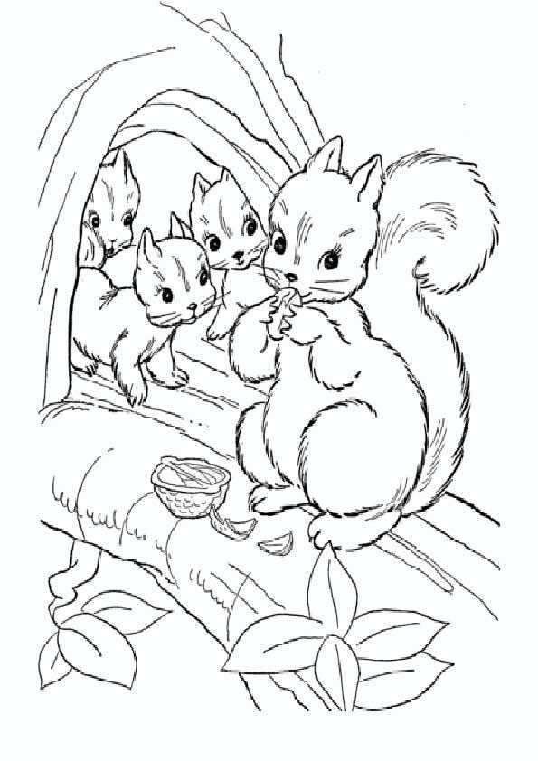 eichhörnchen-19 | ausmalbilder malvorlagen