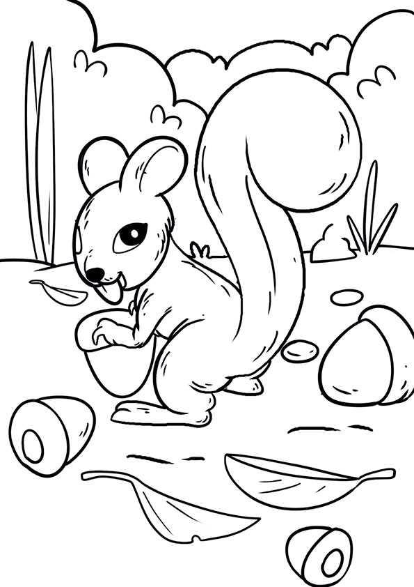ausmalbilder eichhörnchen-21